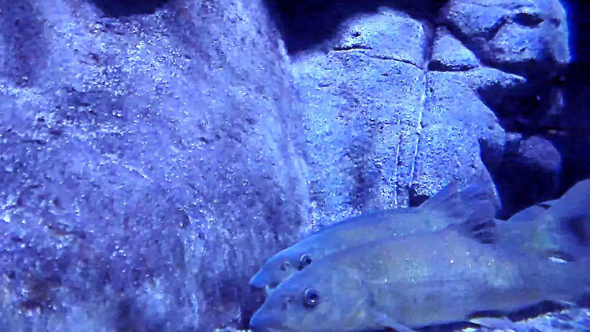 babel underwater